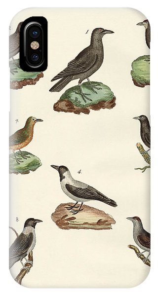 Raven iPhone Case - Ravens Crows And Daws by Splendid Art Prints