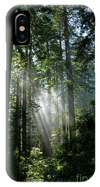 Rays In Redwoods IPhone Case