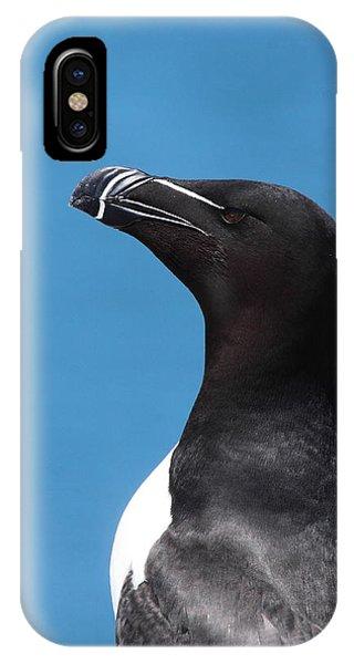 Razorbill iPhone Case - Razorbill Profile by Bruce J Robinson