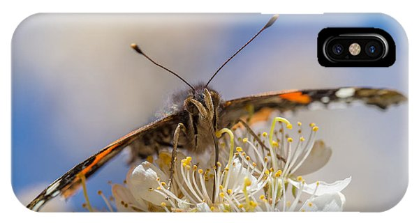 Red Admiral Butterfly On Plum Blossoms IPhone Case
