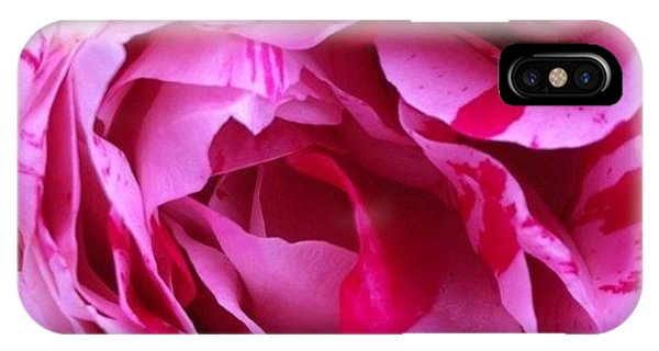 Florals iPhone Case - Red And Pink Rose by Portraits By NC