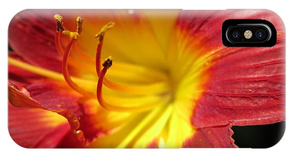 Red And Yellow Day Lily IPhone Case