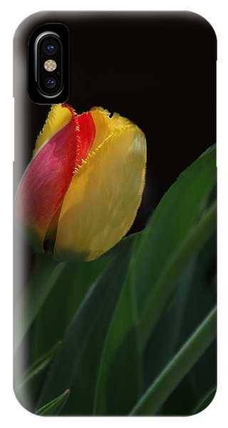 Red And Yellow Fringe Tulip IPhone Case