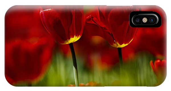Tulip iPhone Case - Red And Yellow Tulips by Nailia Schwarz