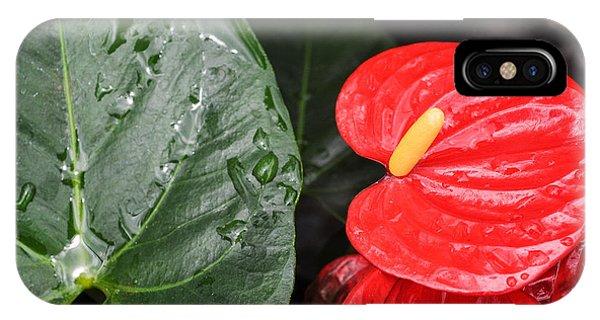 Red Anthurium Flower IPhone Case