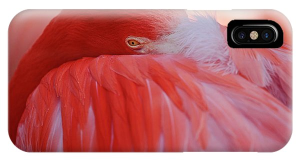 Feathers iPhone Case - Red by Antje Wenner-braun