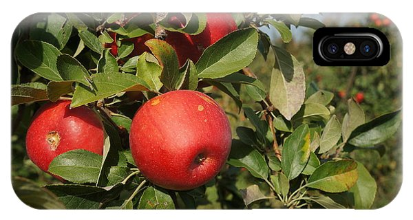 Red Apple Growing On Tree IPhone Case