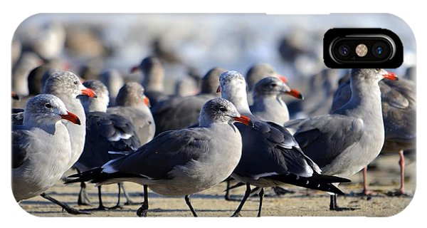 Red Beak Seagull Convention IPhone Case