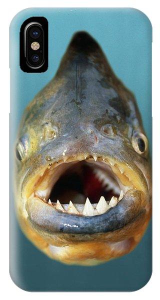 Red-bellied Piranha IPhone Case