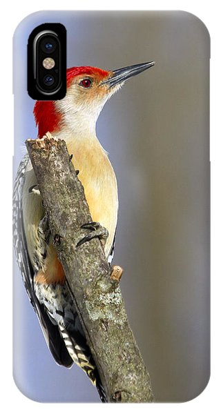 Red-bellied Woodpecker Phone Case by David Lester