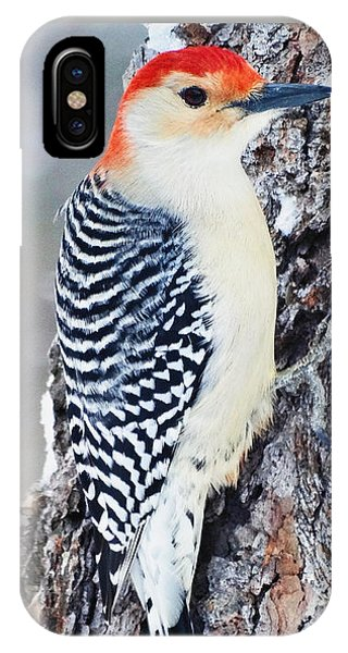 Red Bellied Woodpecker IPhone Case