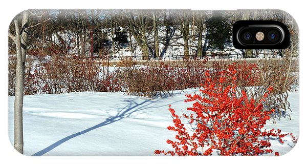 Red Berries White Snow In Prospect Park Photograph By