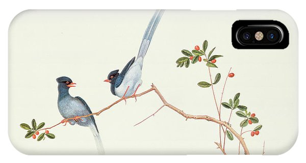 Magpies iPhone Case - Red Billed Blue Magpies On A Branch With Red Berries by Chinese School