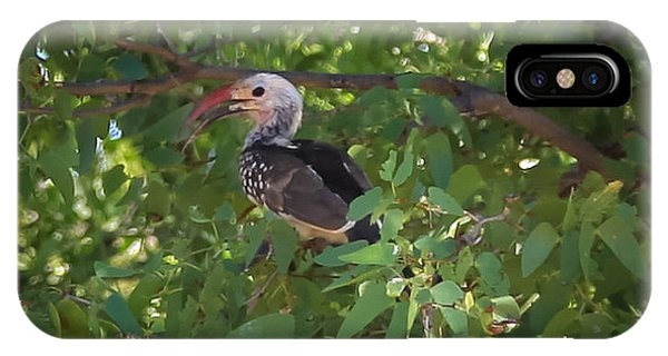 Red Billed Hornbill IPhone Case