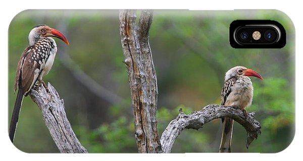 Red-billed Hornbills IPhone Case