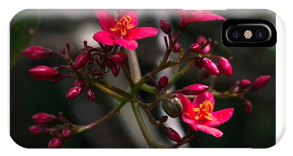 Red Jatropha Blossoms IPhone Case