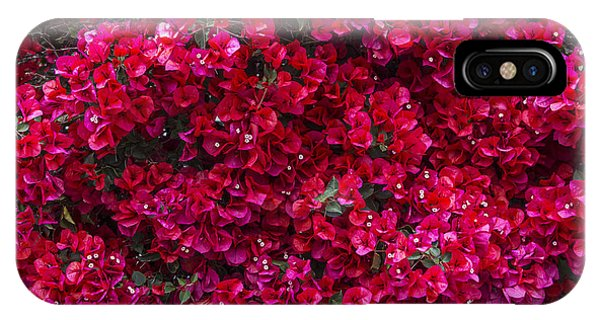 Bougainvillea iPhone Case - Red Bougainvillea by Garry Gay