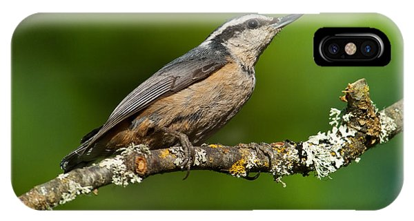 Red Breasted Nuthatch In A Tree IPhone Case