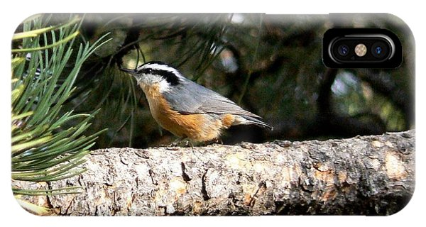 Red-breasted Nuthatch In Pine Tree IPhone Case