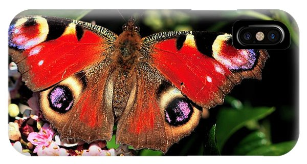 IPhone Case featuring the photograph Red Butterfly In The Garden by Jeremy Hayden