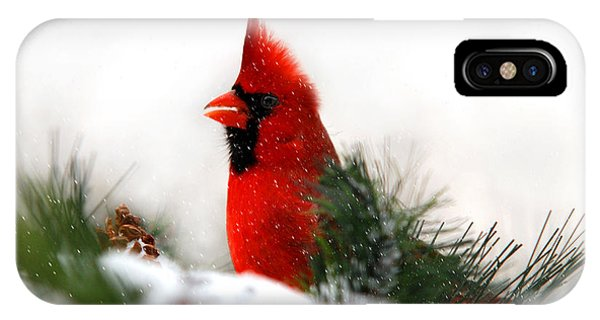 Red Cardinal IPhone Case