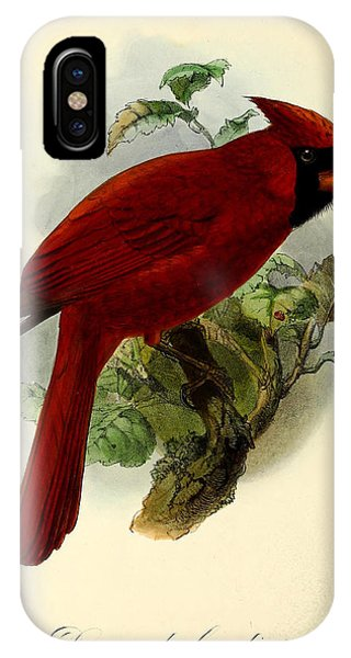 Wild Life iPhone Case - Red Cardinal by Dreyer Wildlife Print Collections