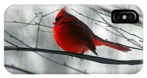 Red Cardinal On Winter Branch  IPhone Case