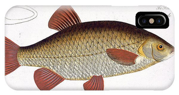 Ichthyology iPhone Case - Red Carp by Andreas Ludwig Kruger
