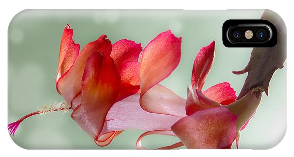 Red Christmas Cactus Bloom IPhone Case