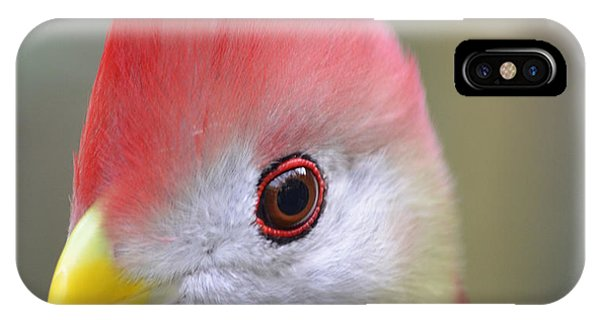 Red Crested Turaco IPhone Case