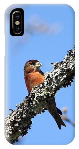 Red Crossbill Finch IPhone Case