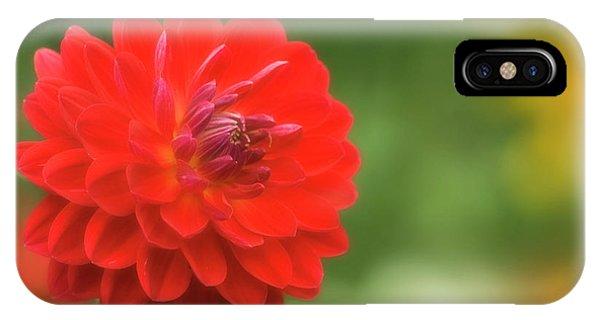 Hybrid iPhone Case - Red Dahlia (dahlia Sp.) by Maria Mosolova/science Photo Library