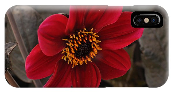 Red Dahlia IPhone Case