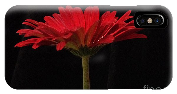 Red Daisy 4 IPhone Case
