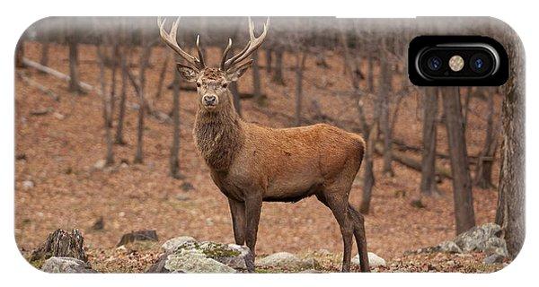 Red Deer IPhone Case