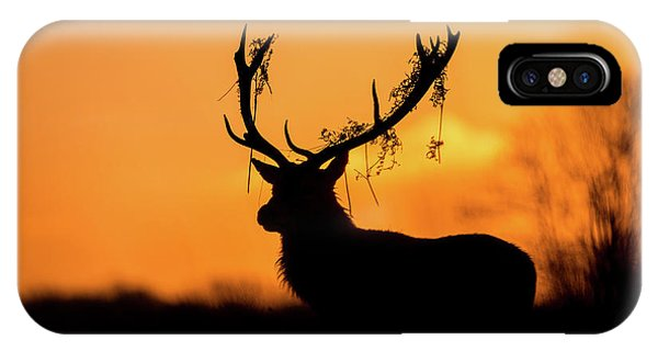 Stag iPhone Case - Red Deer Stag Silhouette by Stuart Harling