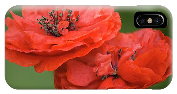 Cultivar iPhone Case - Red Double Shirley Poppies by Maria Mosolova