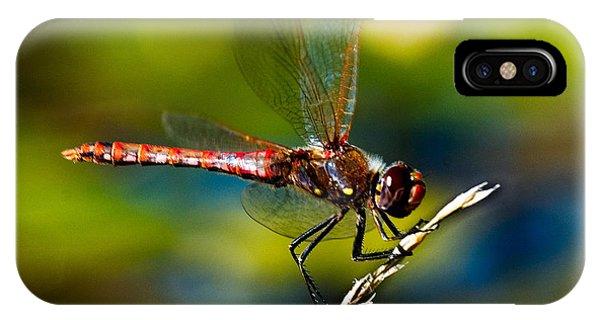 Red Dragonfly Phone Case by Mae Wertz