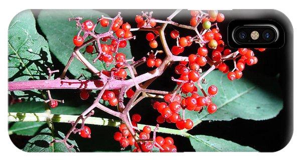 Red Elderberry IPhone Case