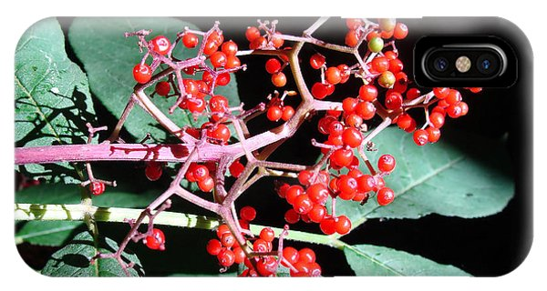 Red Elderberry IPhone Case