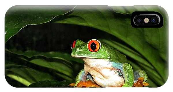 Red Eyed Green Tree Frog IPhone Case