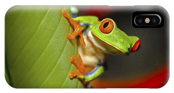Red Eyed Leaf Frog IPhone Case