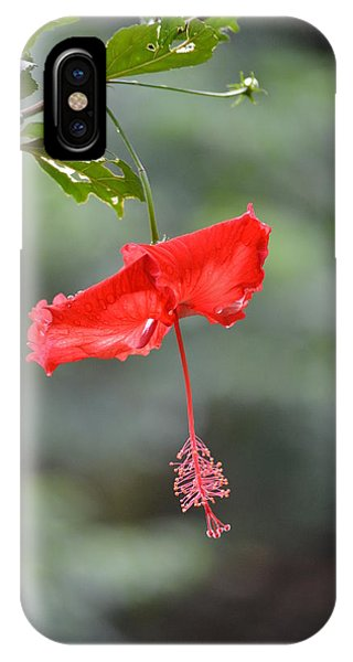 Red Flower St. John's IPhone Case
