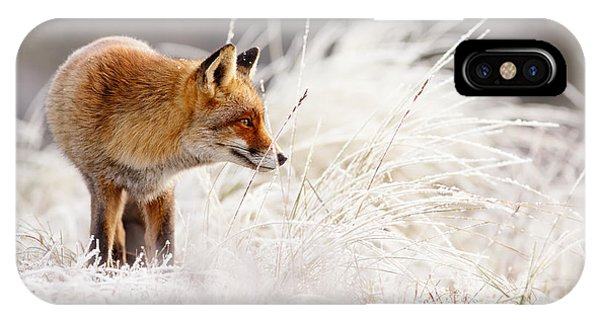 Winter iPhone Case - Red Fox And Hoar Frost _ The Catcher In The Rime by Roeselien Raimond