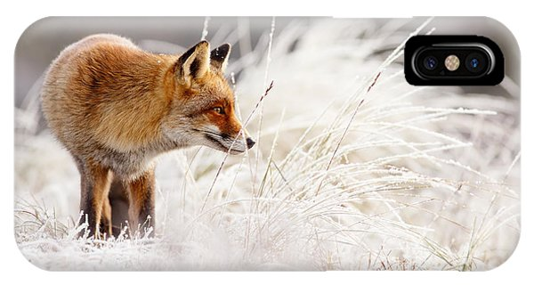 Red Fox And Hoar Frost _ The Catcher In The Rime IPhone Case