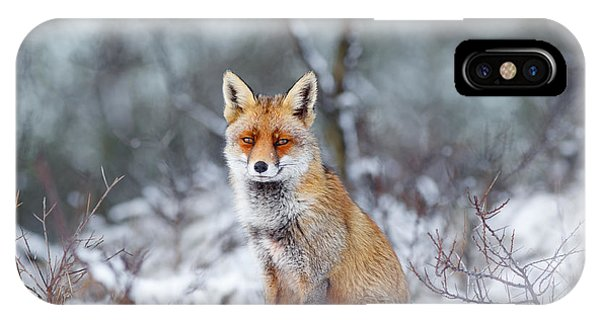 Red Fox Blue World IPhone Case