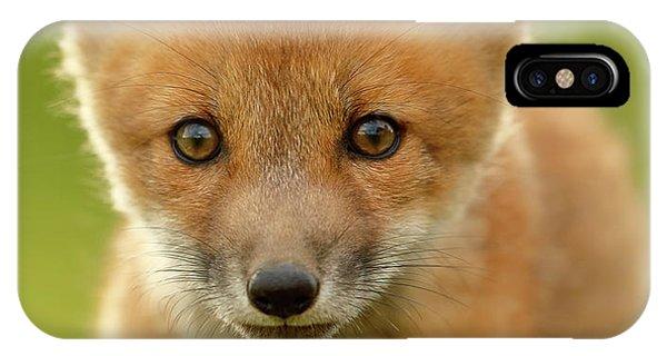 Cute iPhone Case - Red Fox Cub by Assaf Gavra
