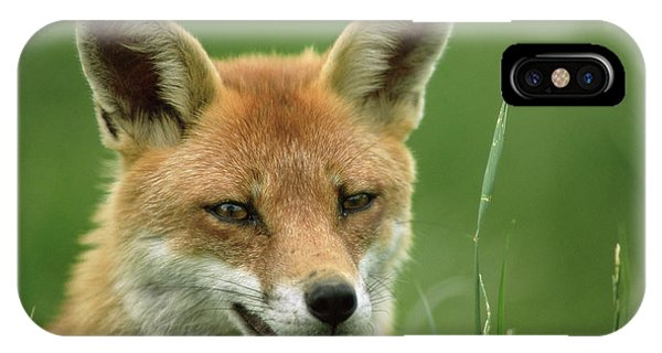 Red Fox Phone Case by Duncan Shaw/science Photo Library