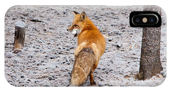Red Fox Egg Thief IPhone Case