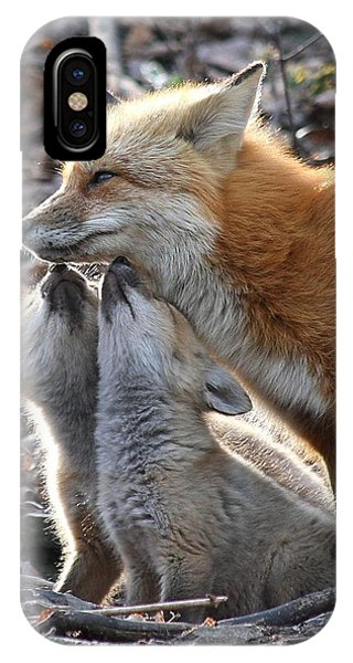 Red Fox Kits And Parent IPhone Case